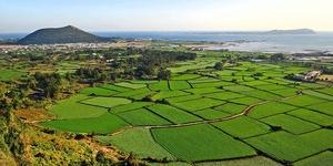 超乎想象的十大济州岛徒步旅行路线