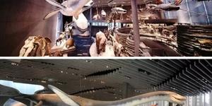上海有趣的博物馆(1)