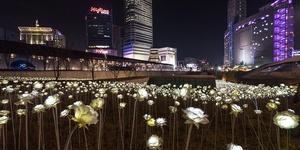 首尔最浪漫|夜晚盛开玫瑰海