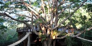 清迈巨树咖啡屋
