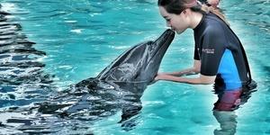 【新加坡】和海豚的欢乐时光