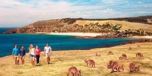 袋鼠岛——没有围栏的动物园